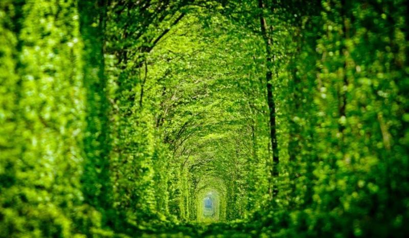 Результат пошуку зображень за запитом тунель кохання