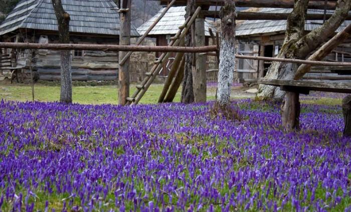 Екскурсія в Карпати, екскурсія на шипіт, долина крокусів, екскурсія в колочаву
